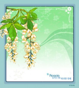 Acacia flower frame vector