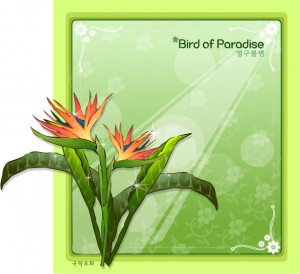 Bird of paradise flower frame vector