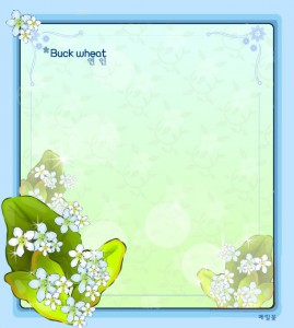 Buck wheat flower frame vector