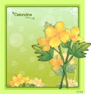 Celandine floral frame vector