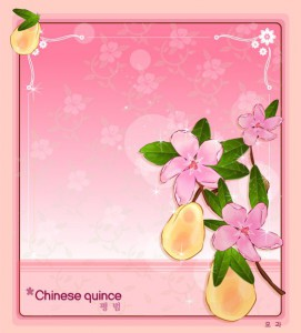 Chinese quince flower frame vector