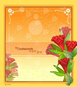 Cockscomb flower frame vector