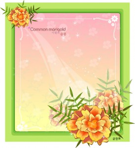 Common marigold flower frame vector