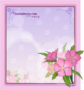 Confederate rose flower vector frame
