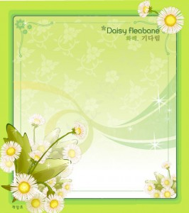 Daisy fleabane flower frame vector