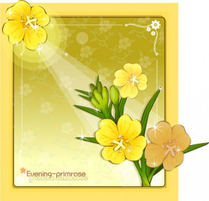 Evening primrose flower frame vector