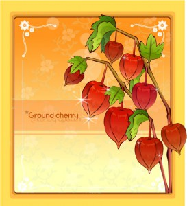 Ground cherry flower frame vector