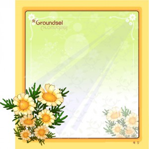 Groundsel flower frame vector