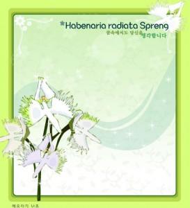 Habenaria radiata flower frame vector