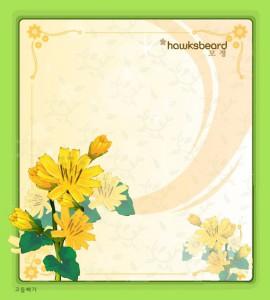 Hawksbeard flower frame vector