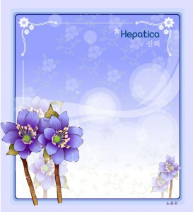 Hepatica flower frame vector