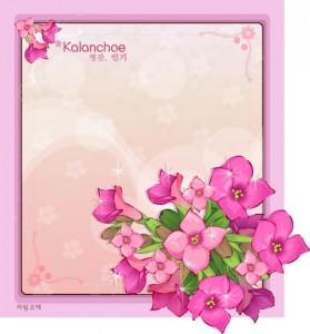 Kalanchoe floral frame vector