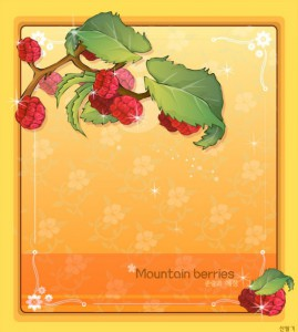 Mountain berries floral frame vector