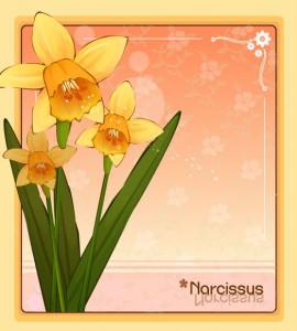 Narcissus flower frame vector