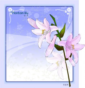 Plantain lily flower frame vector