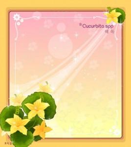 Cucurbita spp flower frame vector