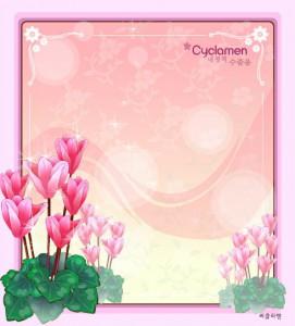 Cyclamen flower frame vector