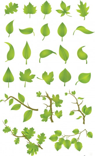 Green leaf and tree set vector