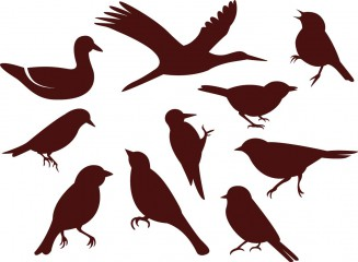 Bird silhouettes simple vector