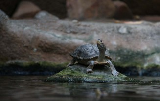 Lovely photo of turtle on the rock free stock photo