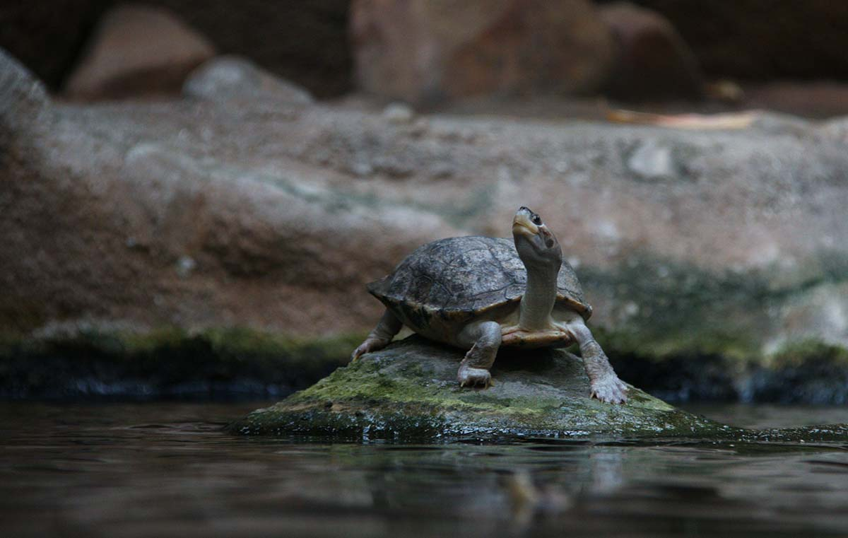 Turtle free stock photo