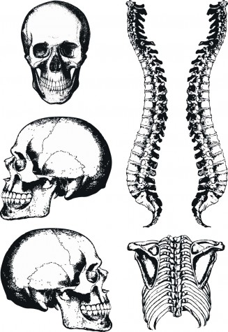 Human skull and spine vector graphics