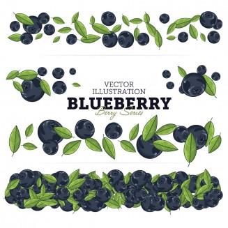 Juicy blueberries vector illustration