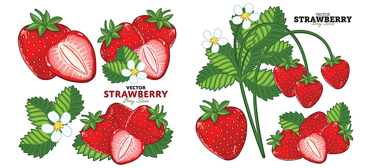 Bright strawberry with leaves vector clipart