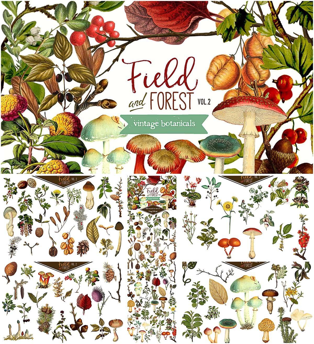Field forest illustrations bundle