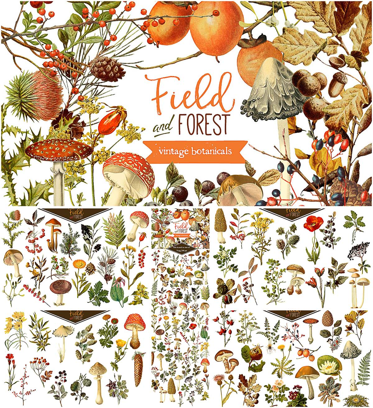 Field forest illustrations fall bundle