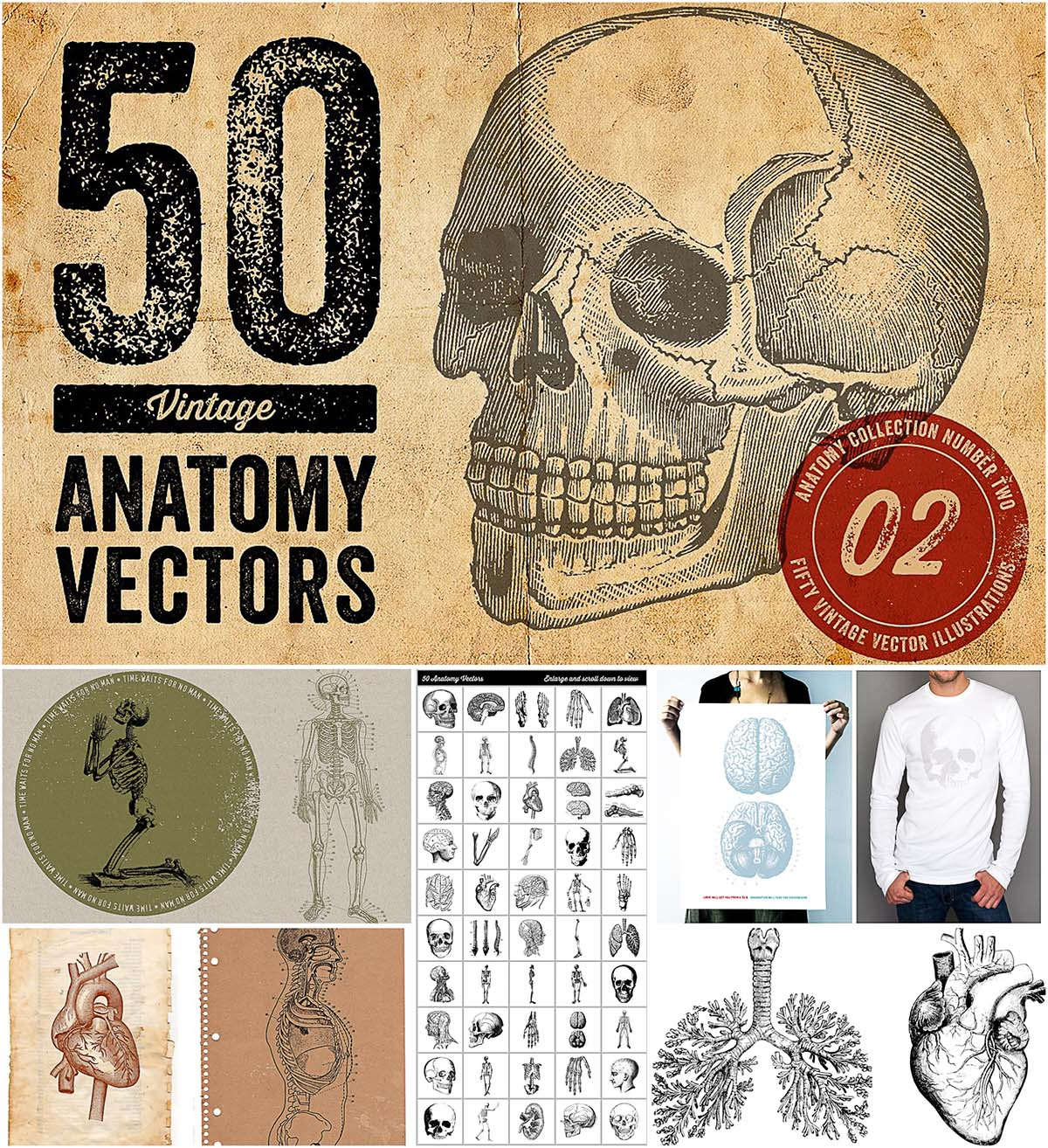 50 vintage anatomy illustrations