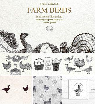 Farm birds vector set