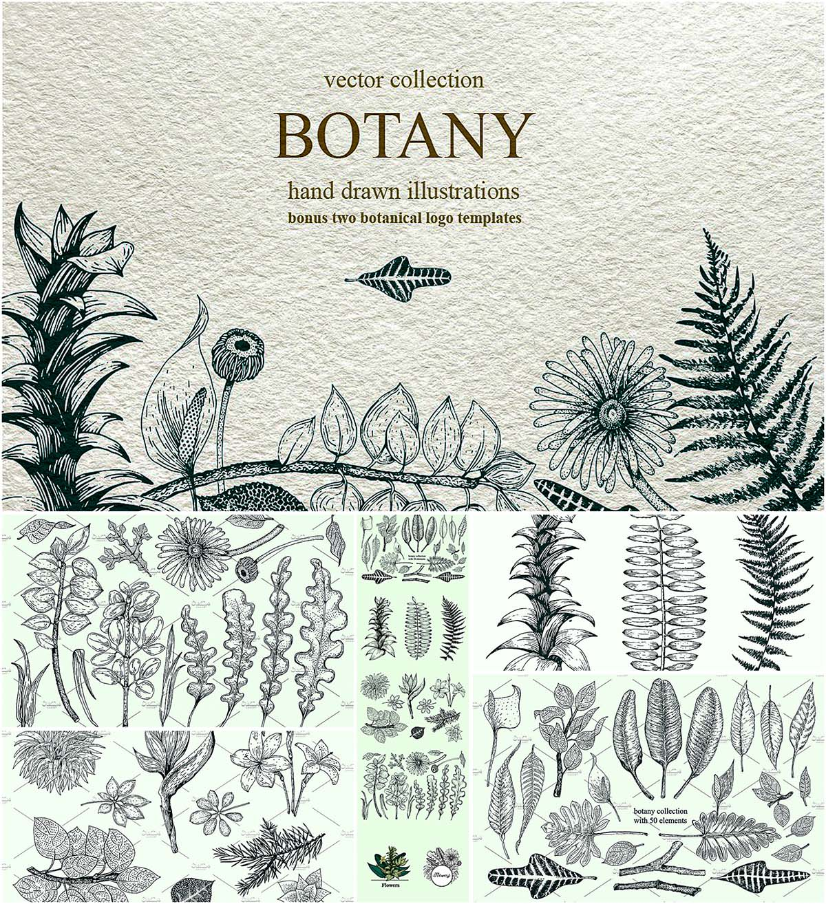 Hand drawn botany collecction