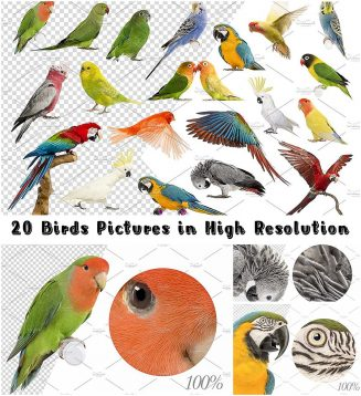 20 birds in high res